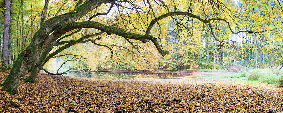Waldsee, Foto: Andreas Mühlleitner